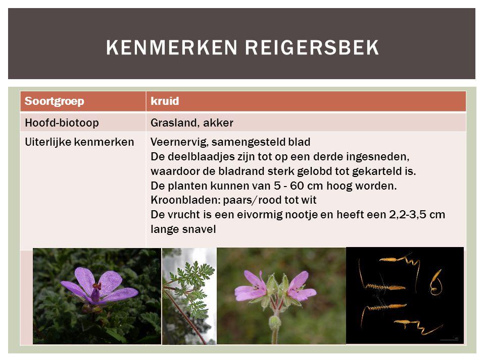 Kenmerken reigersbek Soortgroep kruid Hoofd-biotoop Grasland, akker