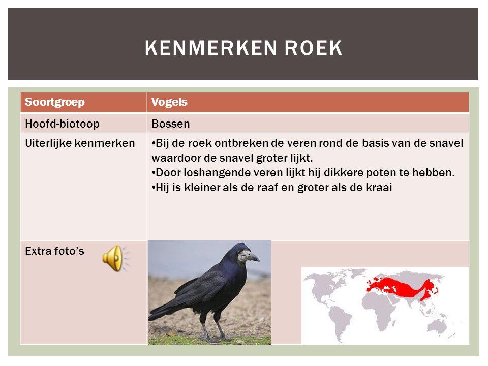 Kenmerken roek Soortgroep Vogels Hoofd-biotoop Bossen