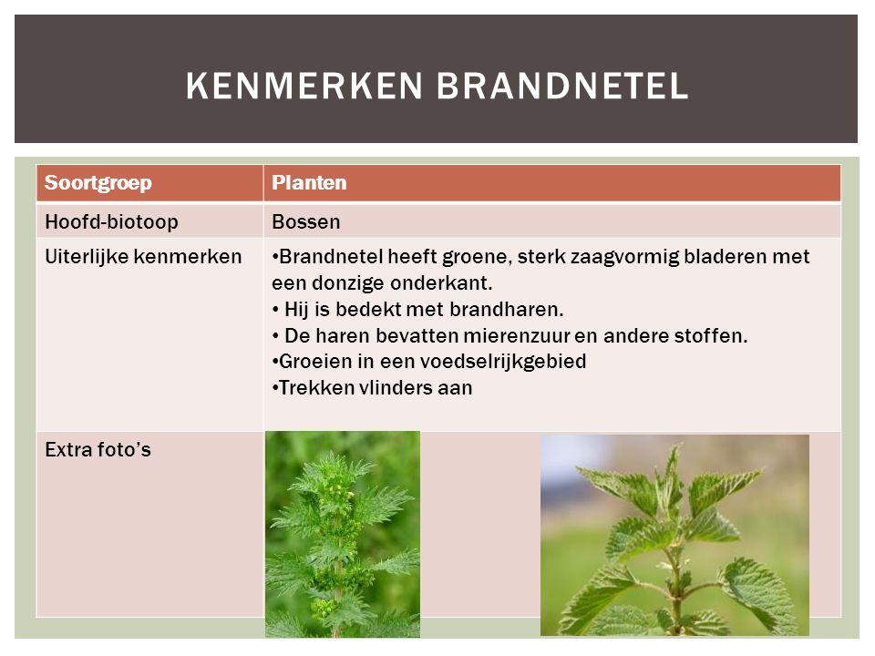Kenmerken brandnetel Soortgroep Planten Hoofd-biotoop Bossen