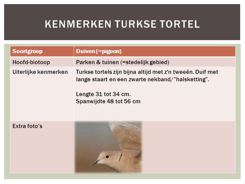 Kenmerken Turkse tortel