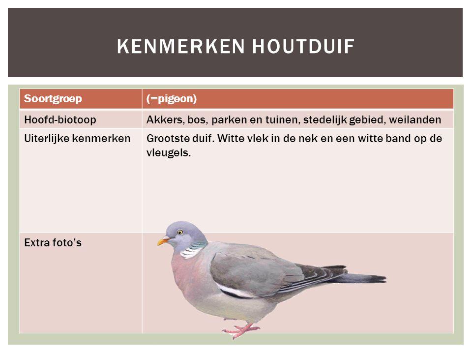 Kenmerken houtduif Soortgroep (=pigeon) Hoofd-biotoop