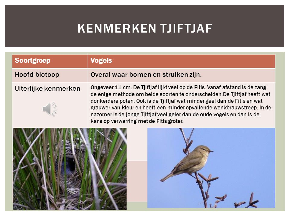 Kenmerken Tjiftjaf Soortgroep Vogels Hoofd-biotoop