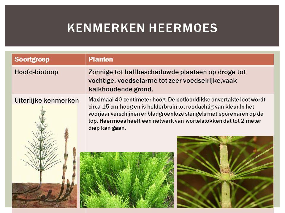 Kenmerken Heermoes Soortgroep Planten Hoofd-biotoop