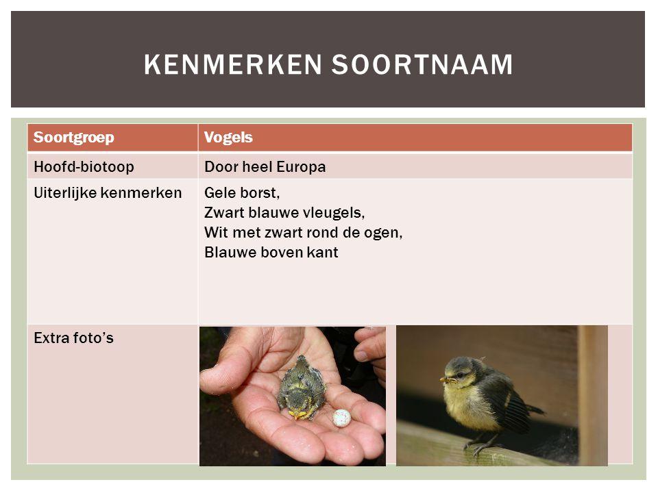 Kenmerken soortnaam Soortgroep Vogels Hoofd-biotoop Door heel Europa