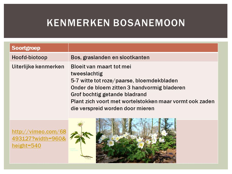 Kenmerken bosanemoon Soortgroep Hoofd-biotoop