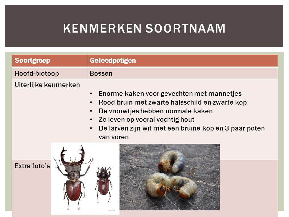Kenmerken soortnaam Soortgroep Geleedpotigen Hoofd-biotoop Bossen