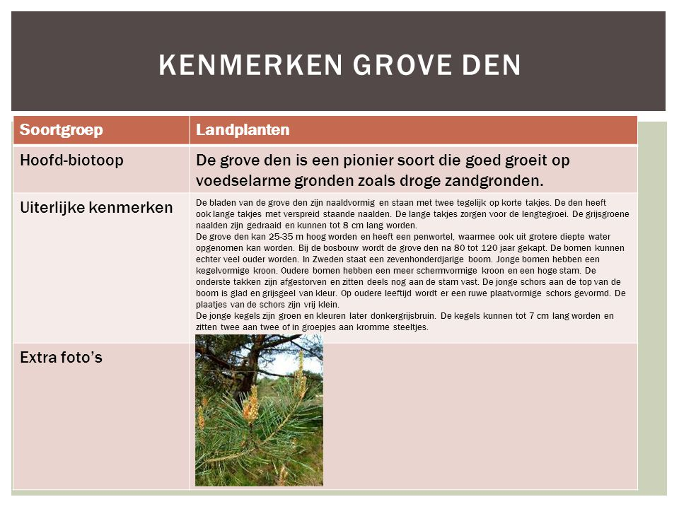 Kenmerken grove den Soortgroep Landplanten Hoofd-biotoop