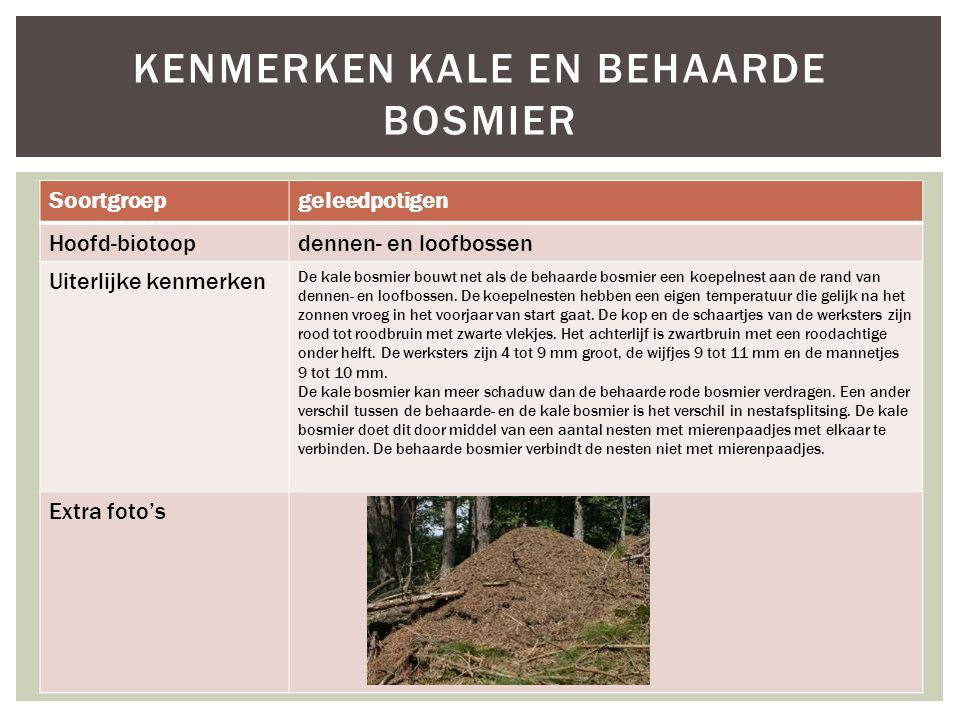 Kenmerken kale en behaarde bosmier