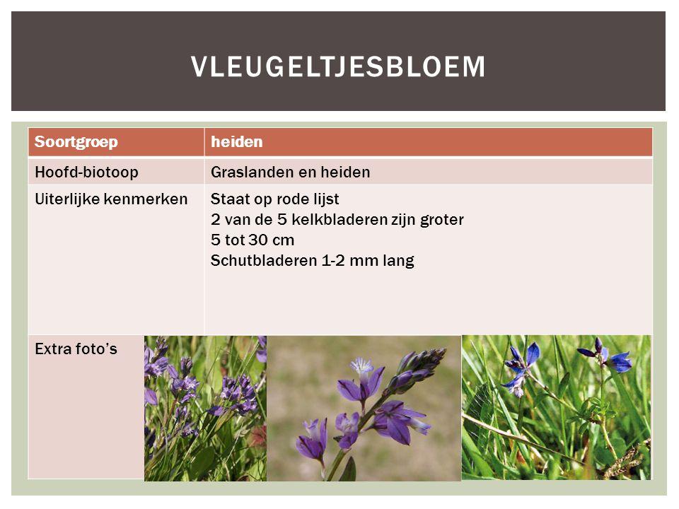 Vleugeltjesbloem Soortgroep heiden Hoofd-biotoop Graslanden en heiden