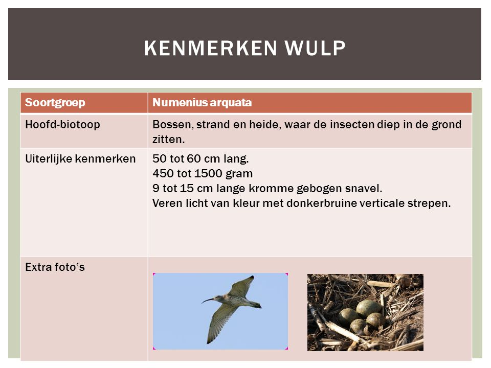 Kenmerken wulp Soortgroep Numenius arquata Hoofd-biotoop