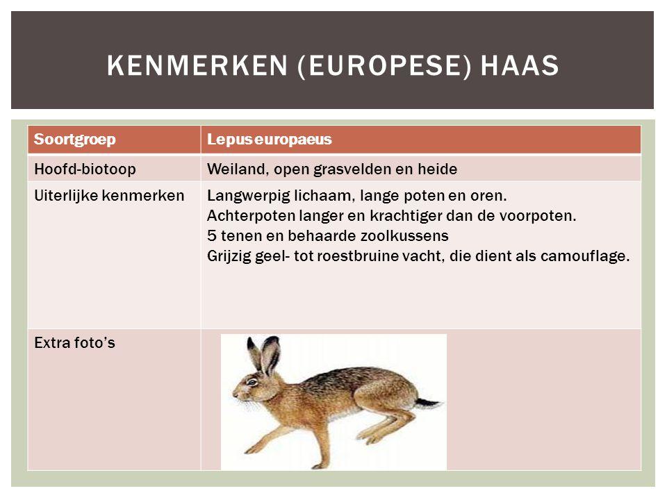 Kenmerken (Europese) haas