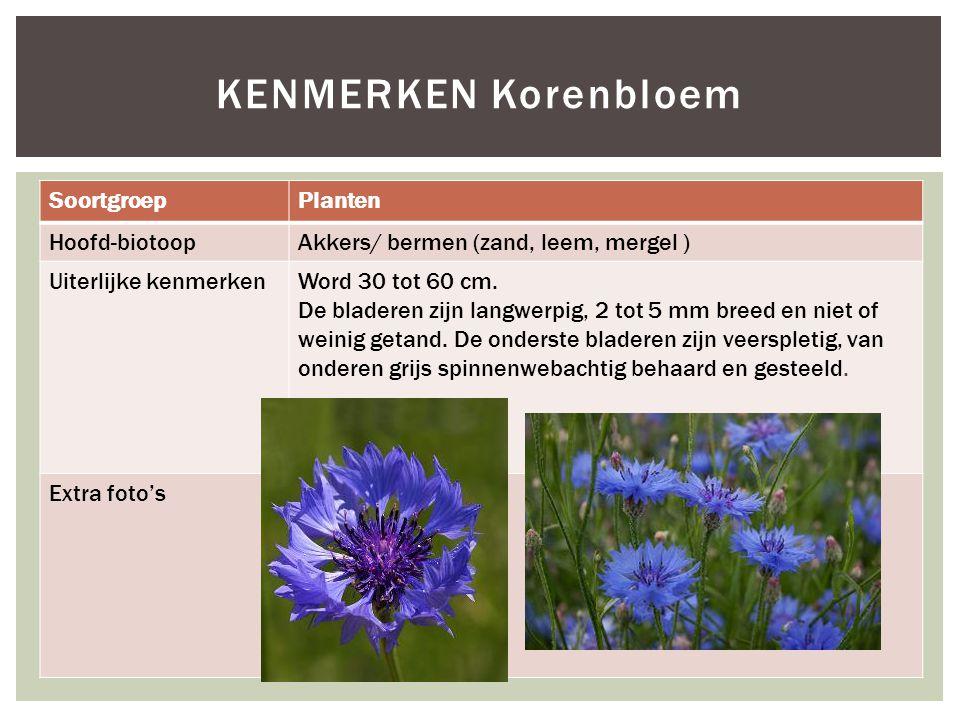 KENMERKEN Korenbloem Soortgroep Planten Hoofd-biotoop
