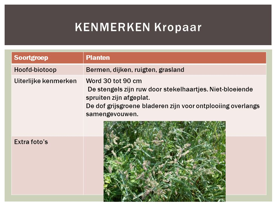 KENMERKEN Kropaar Soortgroep Planten Hoofd-biotoop