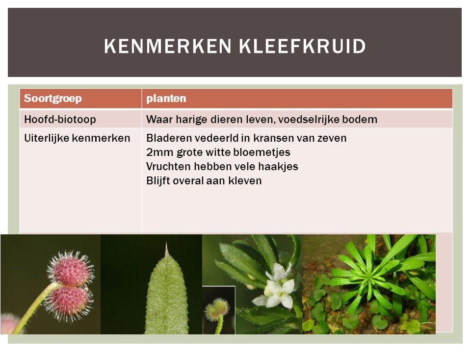 Kenmerken kleefkruid Soortgroep planten Hoofd-biotoop