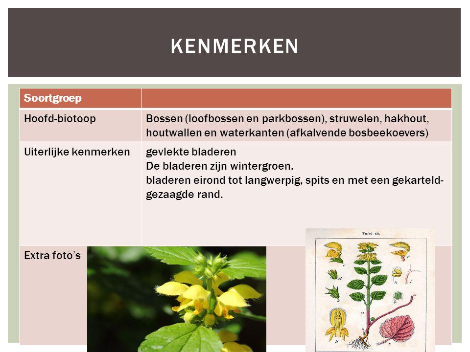 kenmerken Soortgroep Hoofd-biotoop
