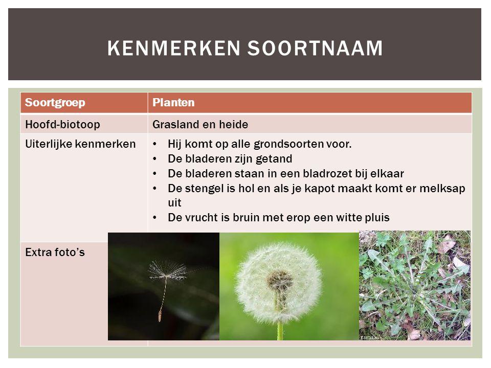 Kenmerken soortnaam Soortgroep Planten Hoofd-biotoop Grasland en heide