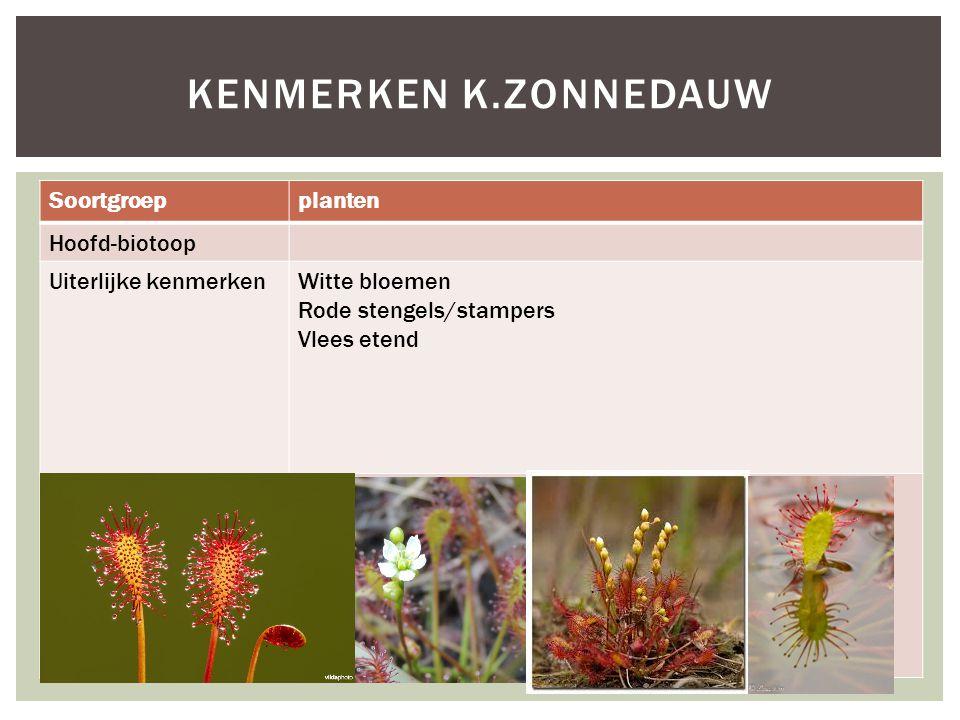 Kenmerken k.zonnedauw Soortgroep planten Hoofd-biotoop