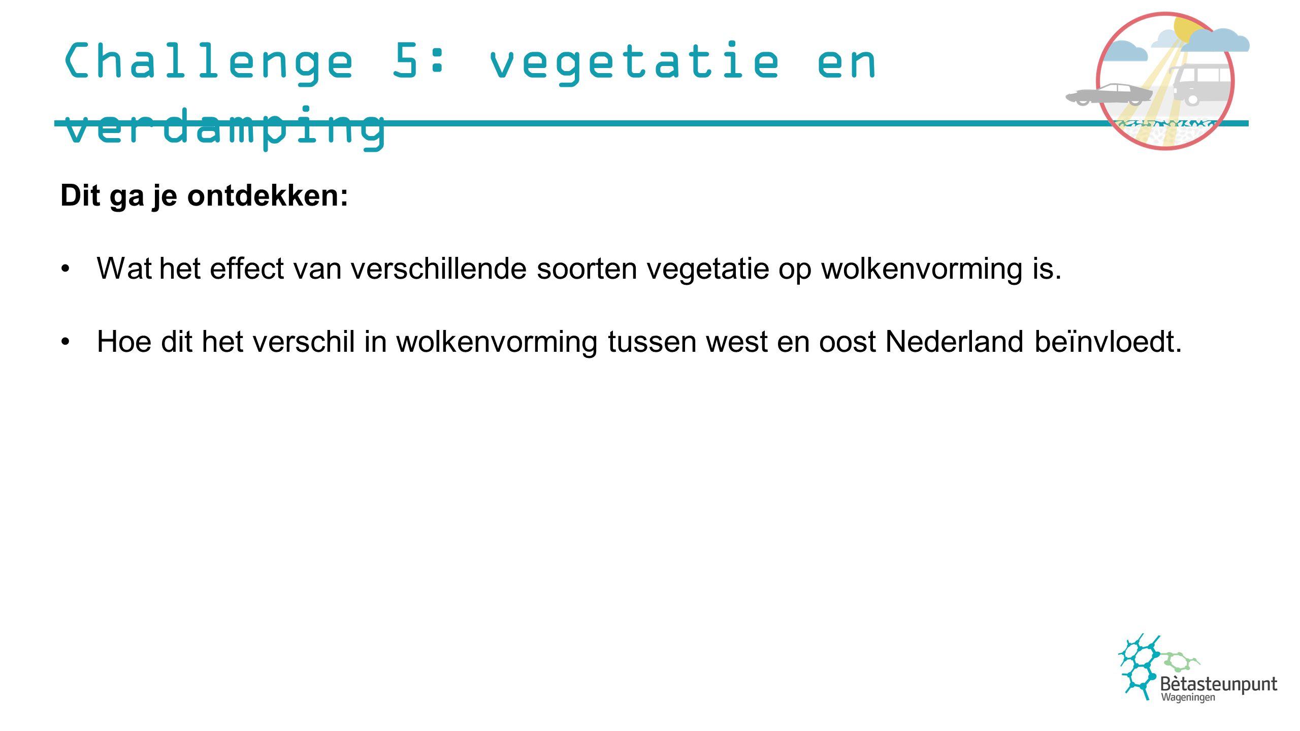 Challenge 5: vegetatie en verdamping