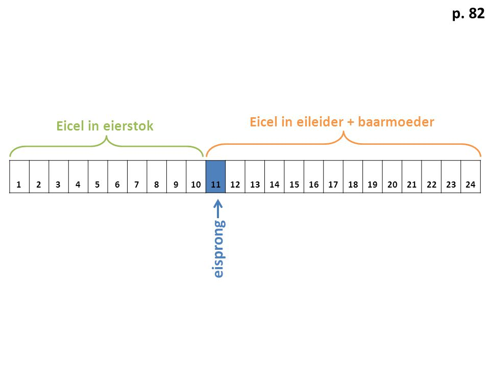 p. 82 eisprong Eicel in eileider + baarmoeder Eicel in eierstok 1 2 3