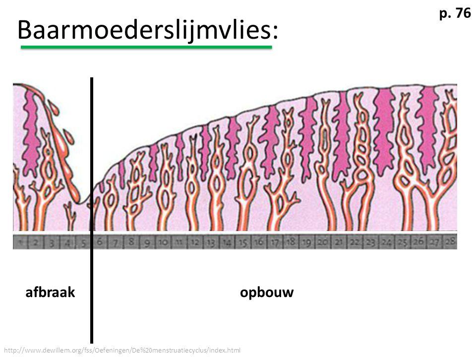 Baarmoederslijmvlies: