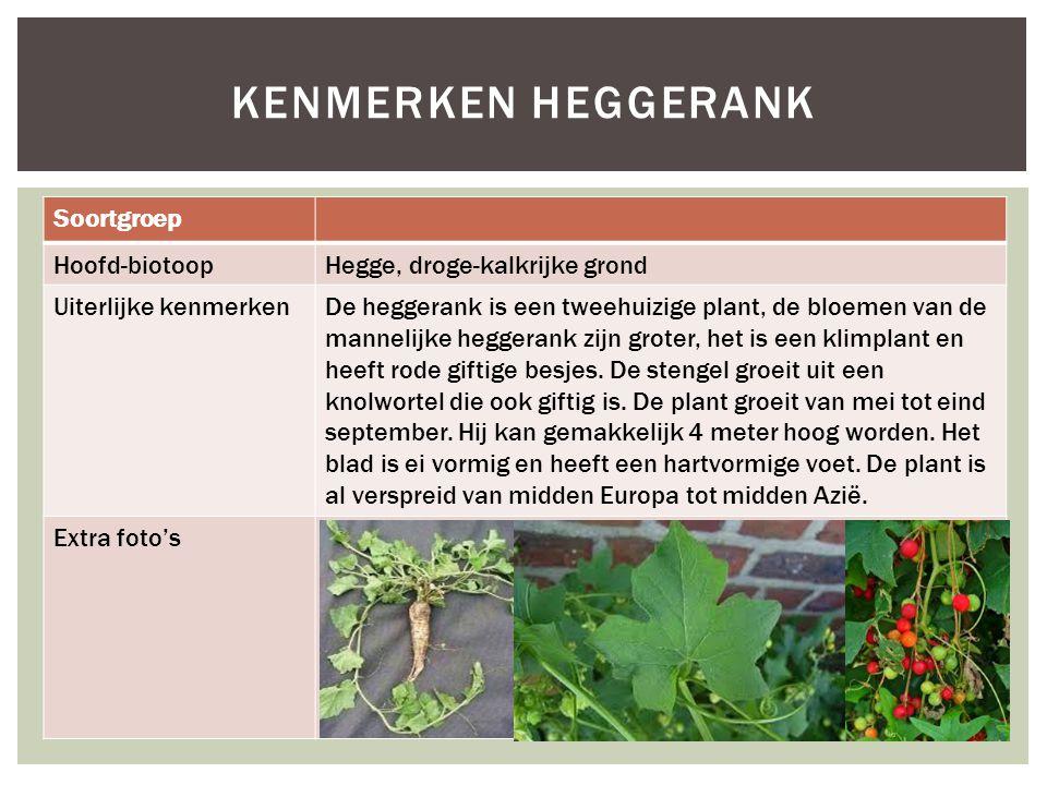Kenmerken heggerank Soortgroep Hoofd-biotoop