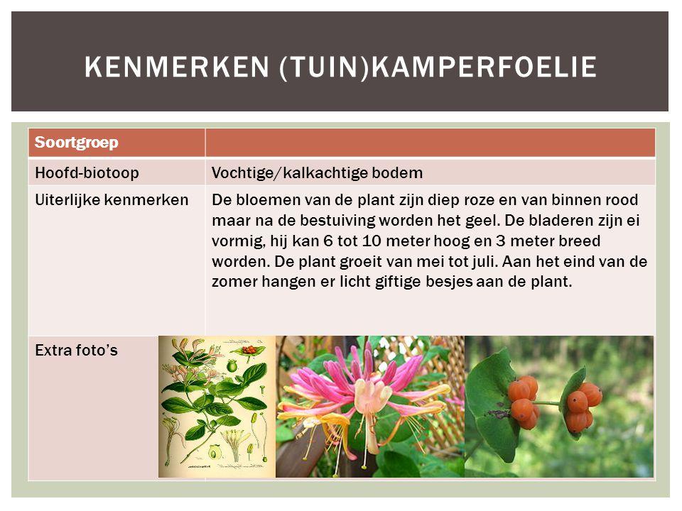 Kenmerken (tuin)kamperfoelie