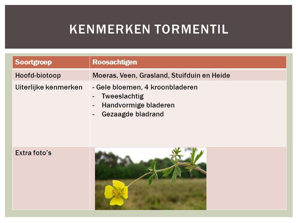 Kenmerken tormentil Soortgroep Roosachtigen Hoofd-biotoop