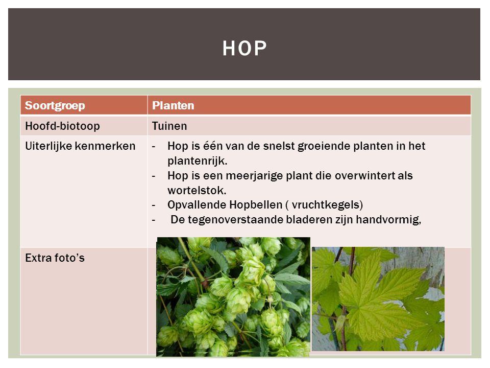 hop Soortgroep Planten Hoofd-biotoop Tuinen Uiterlijke kenmerken