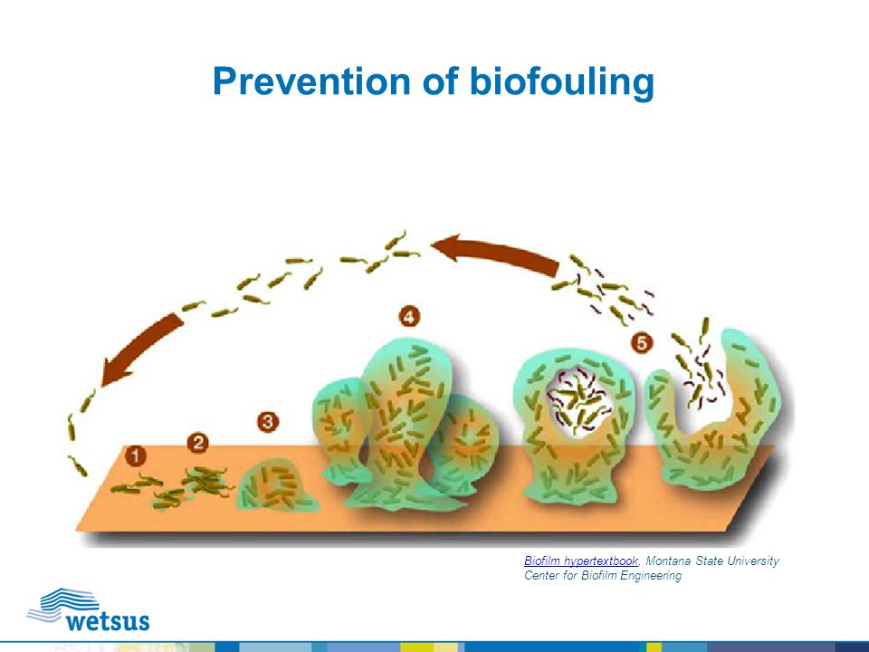 Prevention of biofouling