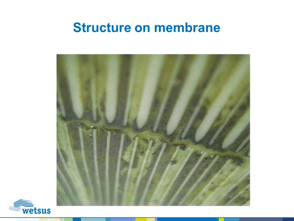Structure on membrane