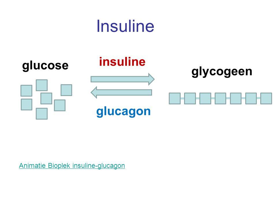 Insuline insuline glucose glycogeen glucagon
