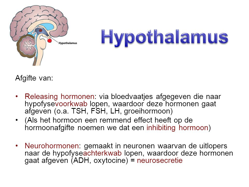Hypothalamus Afgifte van: