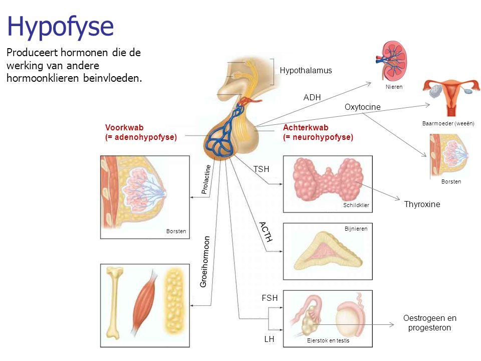 oestrogeen hormoon