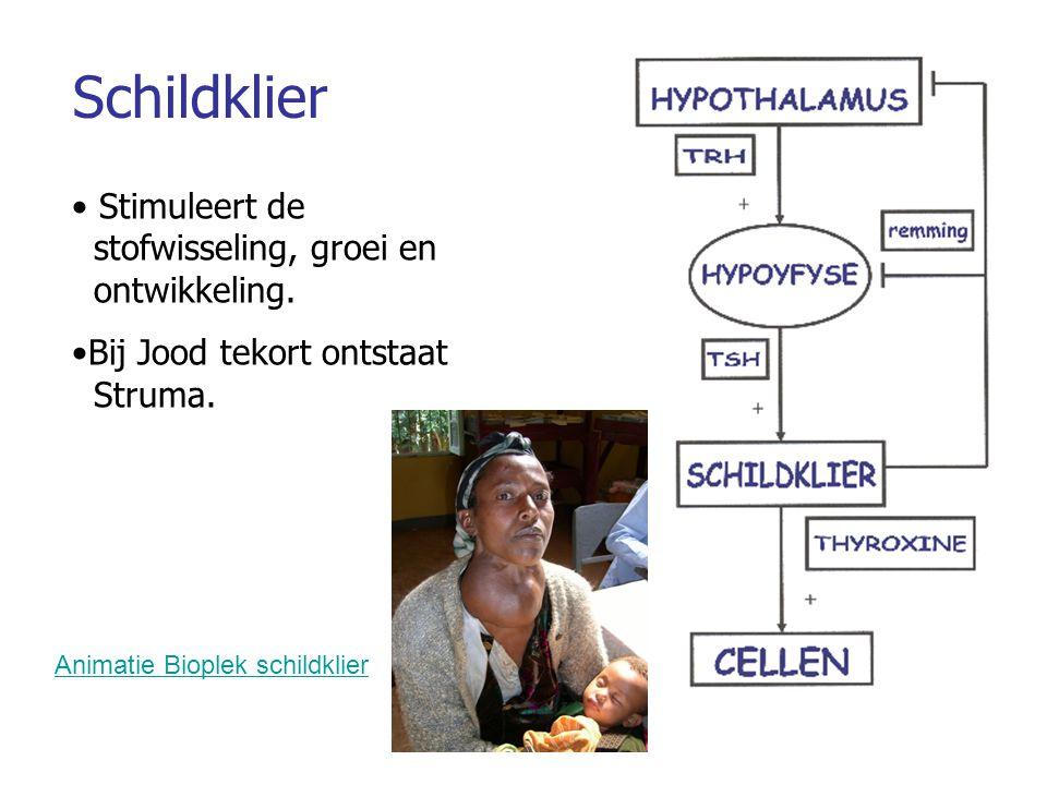 Schildklier Stimuleert de stofwisseling, groei en ontwikkeling.