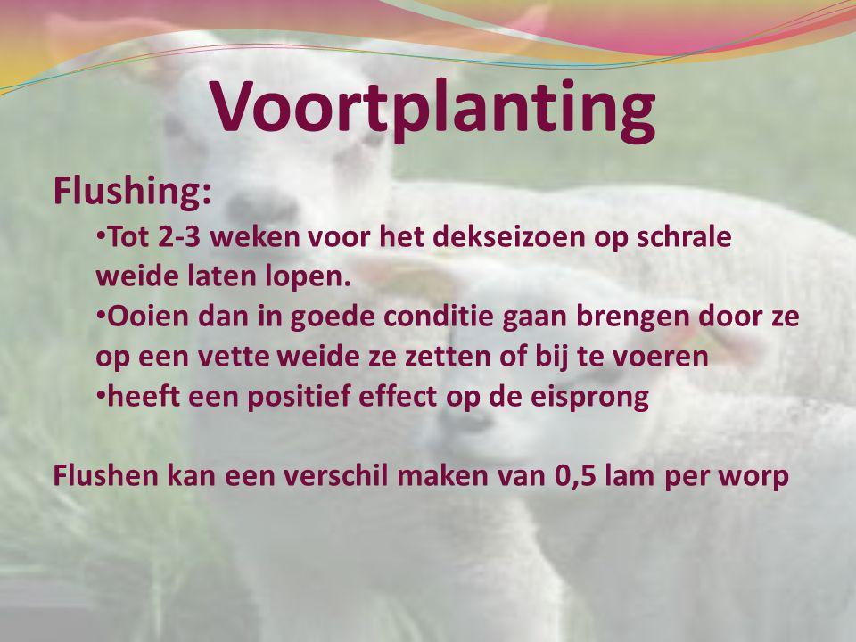 Voortplanting Flushing: