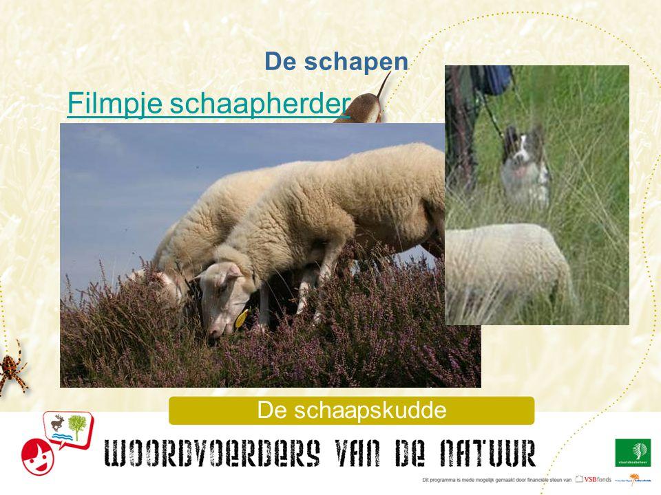 Filmpje schaapherder De schapen