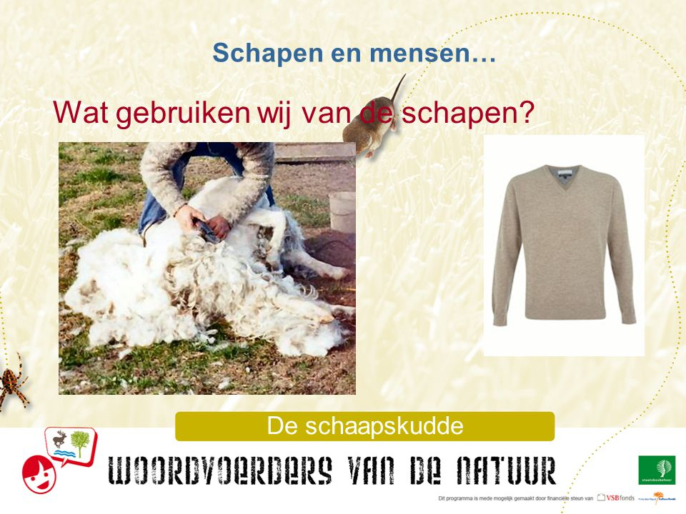 Wat gebruiken wij van de schapen