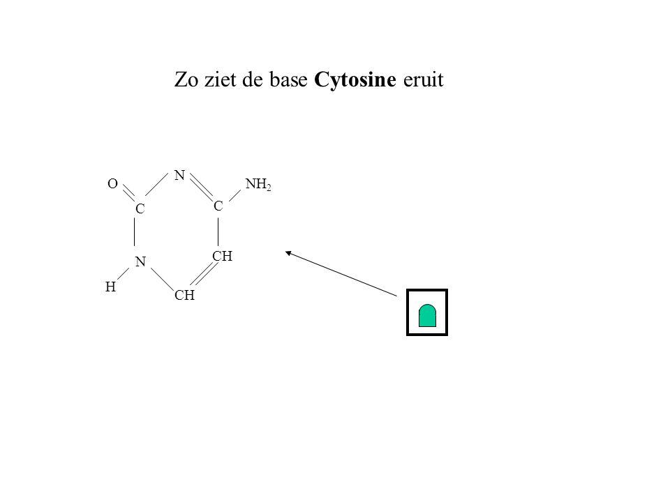 Zo ziet de base Cytosine eruit