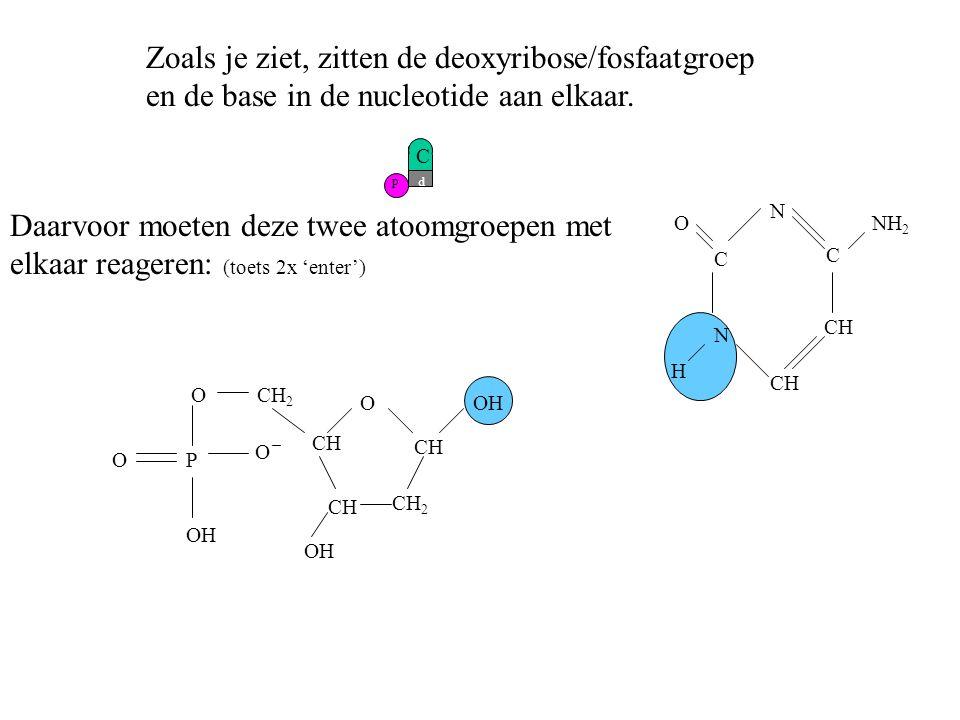 Zoals je ziet, zitten de deoxyribose/fosfaatgroep