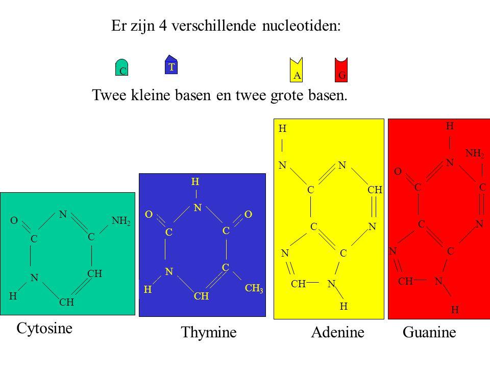 Er zijn 4 verschillende nucleotiden: