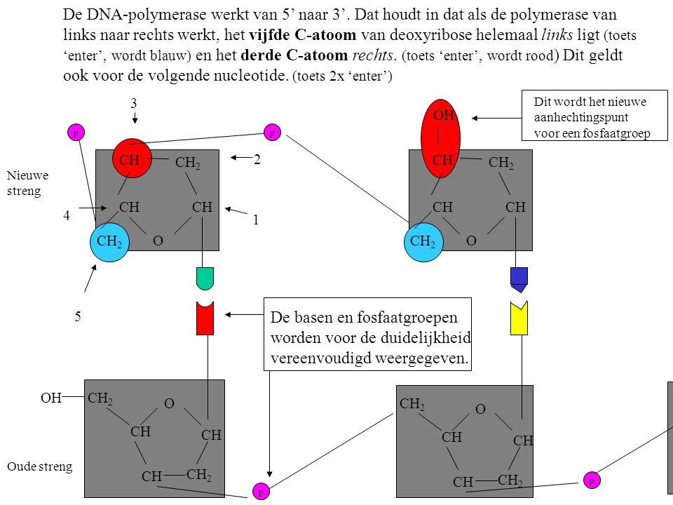 De basen en fosfaatgroepen worden voor de duidelijkheid