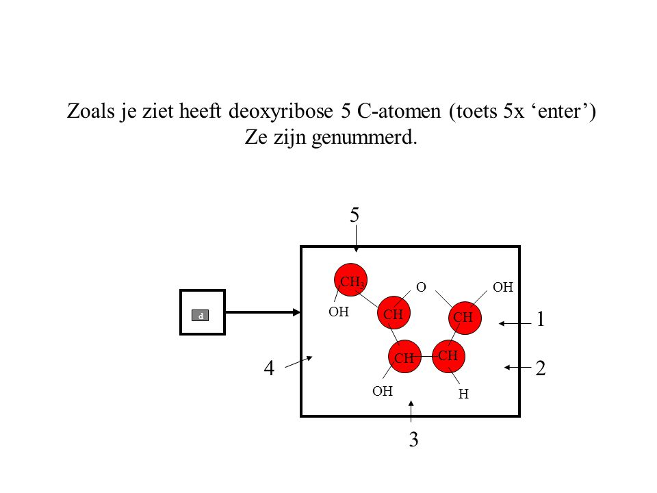 Zoals je ziet heeft deoxyribose 5 C-atomen (toets 5x 'enter')