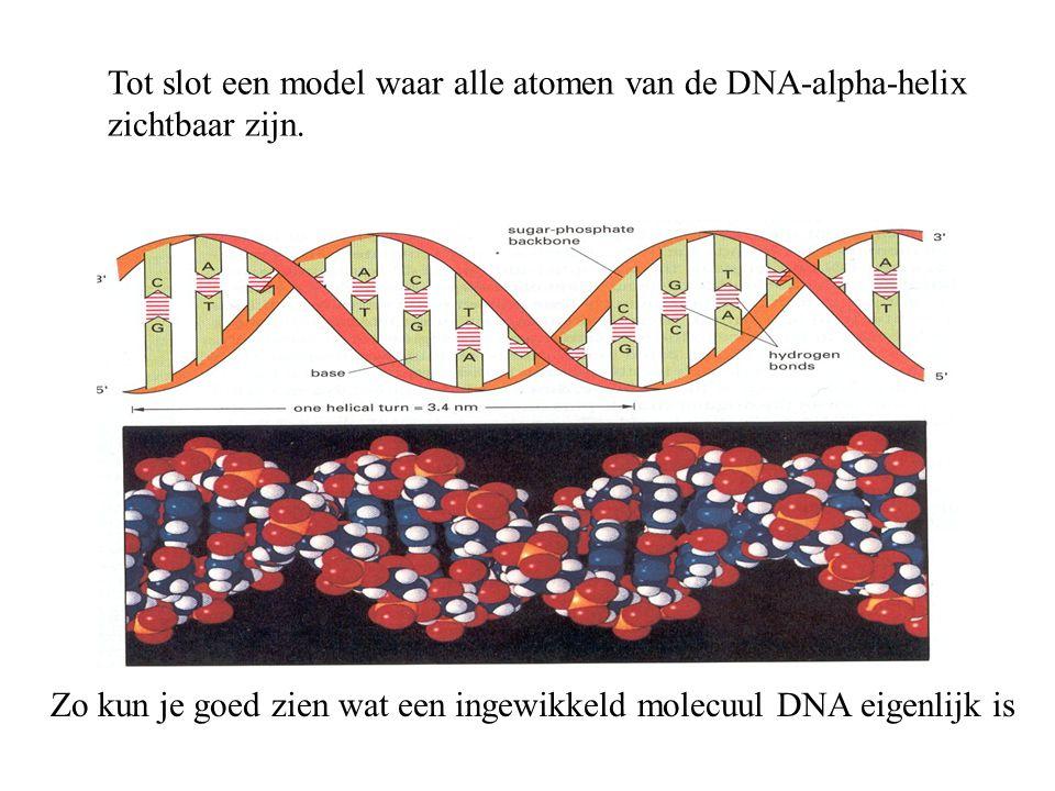 Zo kun je goed zien wat een ingewikkeld molecuul DNA eigenlijk is