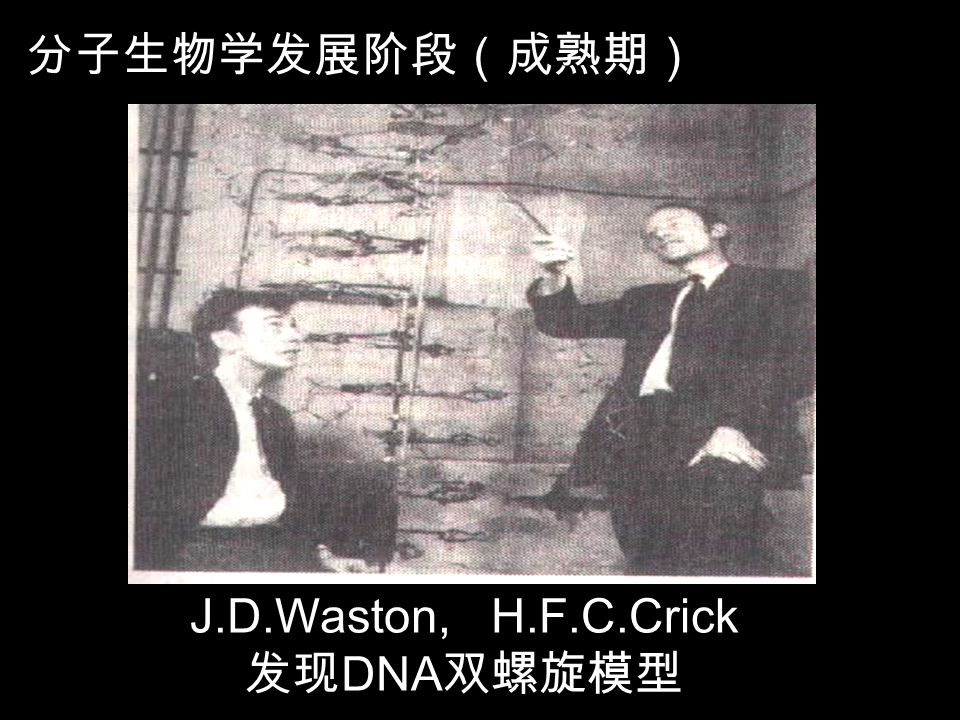 J.D.Waston, H.F.C.Crick 发现DNA双螺旋模型