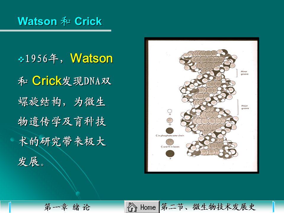 1956年,Watson 和 Crick发现DNA双螺旋结构,为微生物遗传学及育种技术的研究带来极大发展。