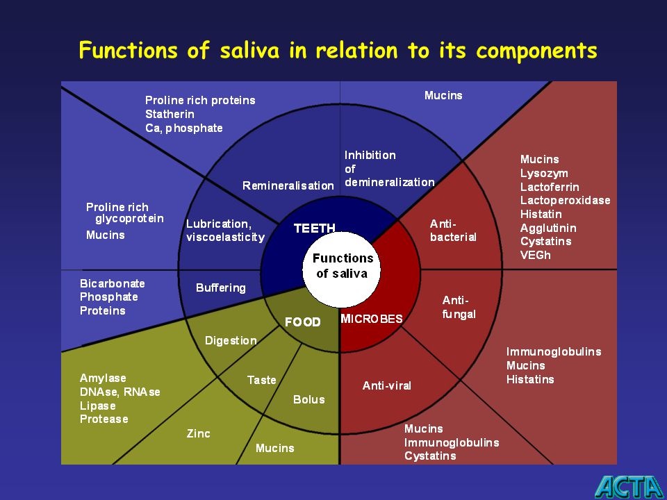 Functions of saliva in relation to its components