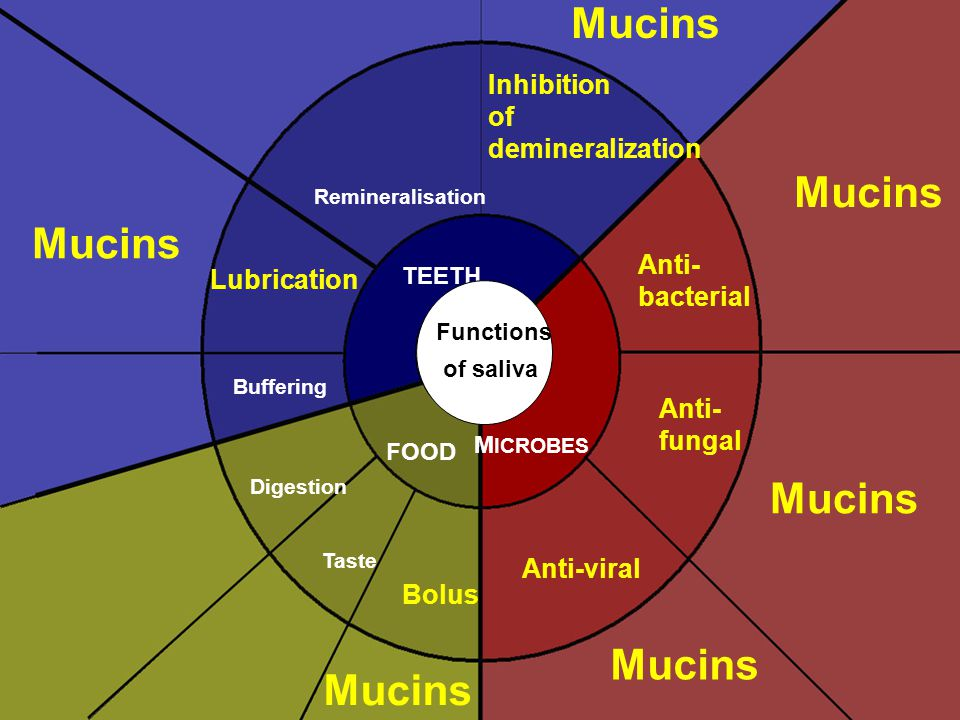 Mucins Mucins Mucins Mucins Mucins Mucins Inhibition of