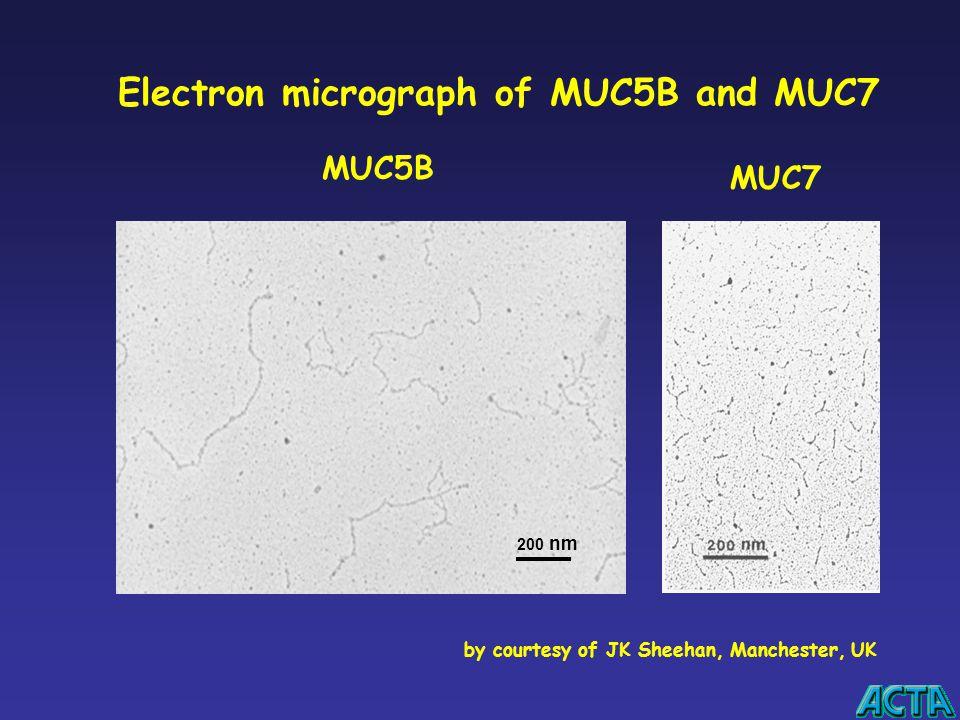 Electron micrograph of MUC5B and MUC7