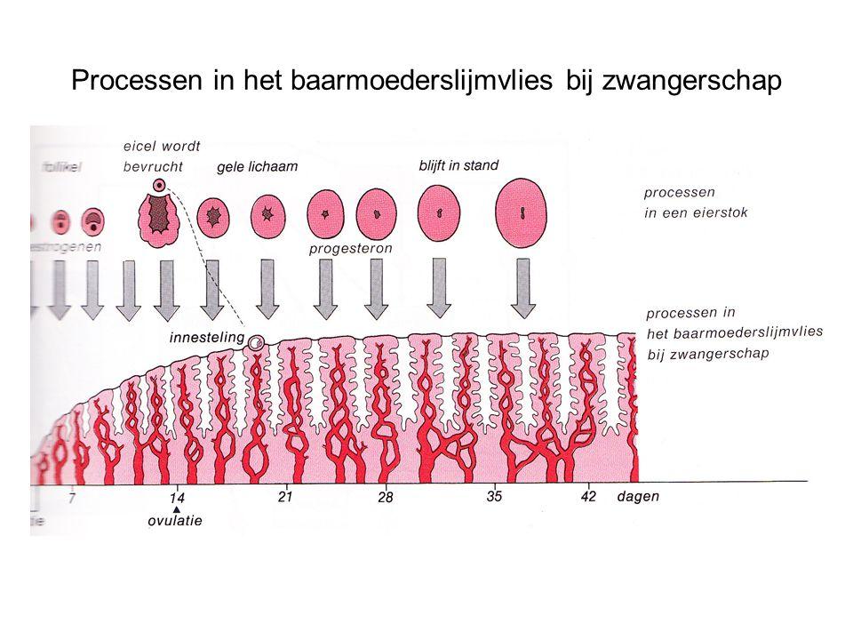 Processen in het baarmoederslijmvlies bij zwangerschap