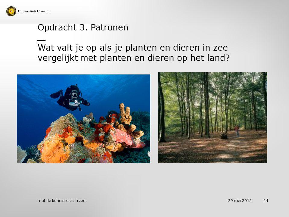 Opdracht 3. Patronen Wat valt je op als je planten en dieren in zee vergelijkt met planten en dieren op het land